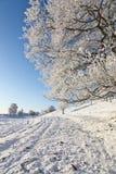 Дуб в зиме стоковое фото rf