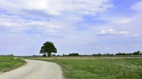 Дуб в конце дороги Стоковые Изображения