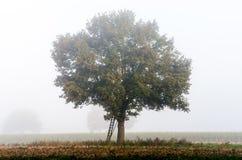 Дуб в осени Стоковое Изображение