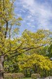 Дуб в парке Стоковые Изображения