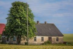 Дуб в пшеничном поле рядом с старого амбара Стоковые Фотографии RF