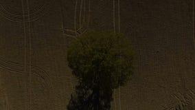 Дуб, дерево, сиротливое поле дуба, одиночное дерево, воздушный отснятый видеоматериал трутня акции видеоматериалы