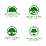 Дуб, дерево, логотип Стоковое Изображение
