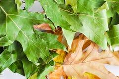 Дуб листает ковер Стоковая Фотография
