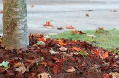 Дуб и упаденные листья Стоковые Фотографии RF