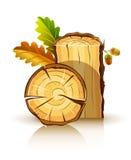 дуб листьев жолудей материальный деревянный бесплатная иллюстрация
