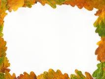 дуб листьев рамок Стоковые Фотографии RF
