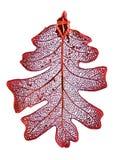 дуб листьев Стоковые Фото