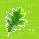 дуб листьев стоковые изображения