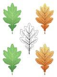 дуб листьев Стоковое Изображение
