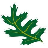 Дуб лист Стоковое Фото
