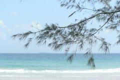 Дуб моря на пляже Стоковые Изображения