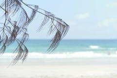 Дуб моря на пляже стоковое фото
