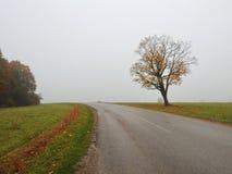 Дуб около дороги, Литвы Стоковая Фотография RF