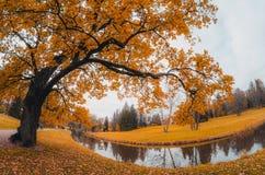 Дуб около реки в осени Стоковое Изображение RF