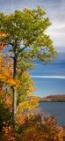 Дуб падения Стоковые Фото