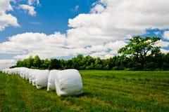 дуб поля сельской местности стоковое фото rf