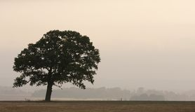 дуб сельской местности стоковое изображение