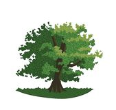 Дуб с листьями и ветвями зеленого цвета стоковое фото