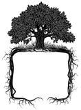 Дуб с рамкой корней иллюстрация штока