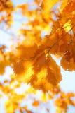 дуб 4 осеней Стоковое Фото