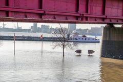 Дуйсбург, Германия - 8-ое января 2017: Река Рейн затопляет Muehlenweide стоковые фотографии rf