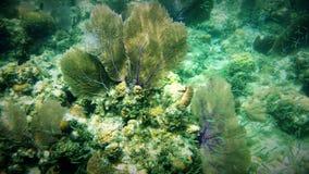 Дуйте коралл Стоковые Изображения