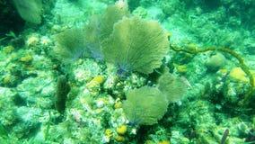 Дуйте коралл Стоковые Фотографии RF