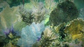 Дуйте коралл Стоковое Изображение