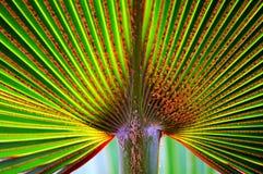дуйте ладонь листьев стоковое фото
