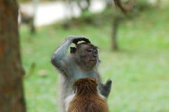 думать обезьяны Стоковые Фото