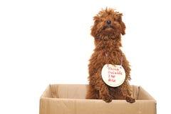 думать собаки коробки внешний стоковое фото