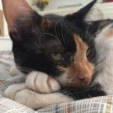 Думая кот Стоковые Фото