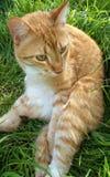 Думая кот Стоковое Изображение