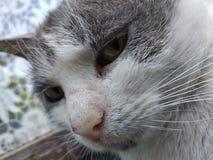 Думая милый кот стоковое фото rf