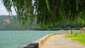 Дунай в лете с деревом и ветром вербы сток-видео
