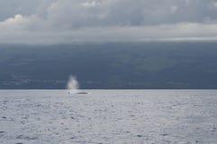 Дуновение от кита Bryde стоковые изображения rf