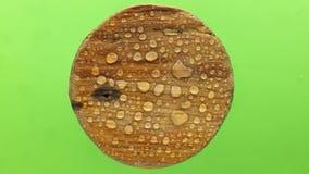Дуновения ветра на дождевых каплях на круглой деревянной доске Изолировано на зеленой предпосылке акции видеоматериалы