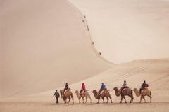 ДУНЬХУАН, КИТАЙ 11-ОЕ МАРТА: Группа в составе туристы едет верблюды внутри Стоковое фото RF