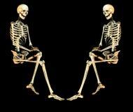 Дуо 2 черепа Стоковые Фото