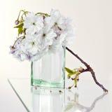 дух вишни цветений Стоковое фото RF