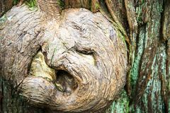 Дух дерева в лесе стоковое фото rf