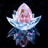 дух цветка Стоковые Изображения RF