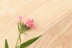 Душистая розовая Панама подняла на коричневый деревянный картон Плоский sp положения Стоковое Изображение