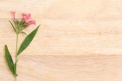 Душистая розовая Панама подняла на коричневый картон Плоская весна fl положения Стоковое фото RF