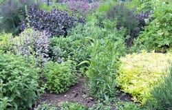 Душистые органические травы в vegetable уделении Стоковая Фотография RF