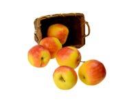 Душистые яблоки Стоковая Фотография