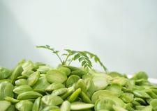 Душистый росток растет от семени sato вонючего Стоковые Изображения RF