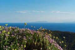Душица и полевые цветки в горах Греции стоковые фото