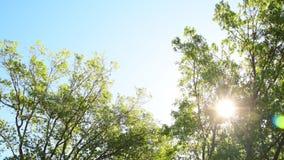 Дуя деревья видеоматериал